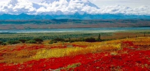 Desktop Wallpaper-s > Nature > Brilliant Colors of Denali National Park, Alaska