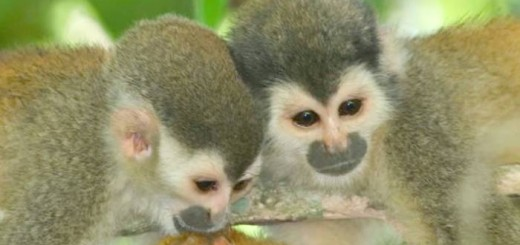monkeys talking