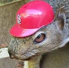 rally squirrel taxidermy fp If Google searches decided the World Series, the Cardinals would win