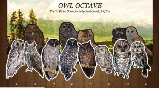Owl Octave 520x289 Create music using Owls, its a real hoot
