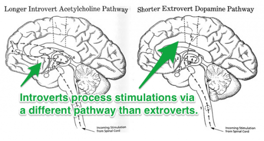 introvert extrovert brains 520x278 The myth of the brainstorming session: The best ideas dont always come from meetings